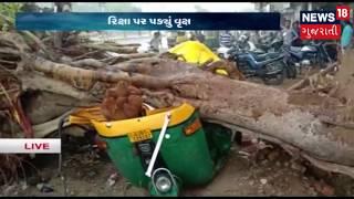 Ahmedabadમાં ભારે વરસાદ થી રીક્ષા પાર પડ્યું વૃક્ષ, કોઈ જાનહાની નહીં