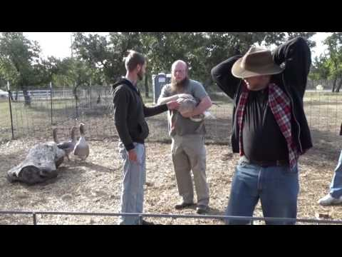 Clipping Goose Wings - From the 2014 Fall Workshop