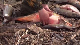 Алтайские браконьеры