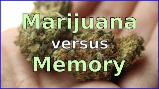 How Does MARIJUANA Affect MEMORY?