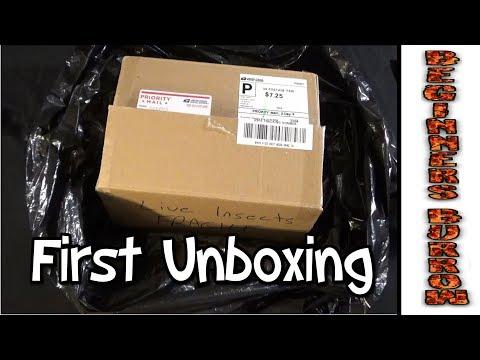 Unboxing My Most Wanted Tarantula - Beginners Burrow