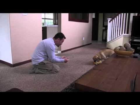 Dog Training: Thriving Canine's 4 Favorite Rainy Day Indoor Dog Exercises