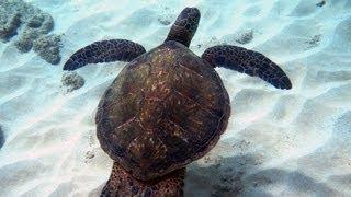 Snorkeling Napili Bay | Maui, Hawaii