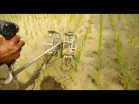 Power Weeder in Paddy