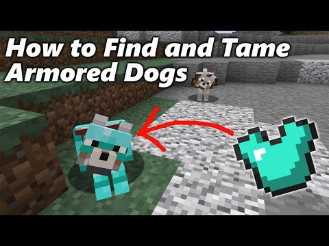 How to Find and Tame ARMORED DOGS in Minecraft
