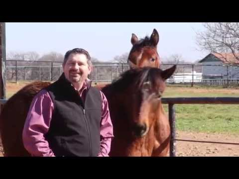 Colloidal Silver for Horses by Mark DePaolo, DVM
