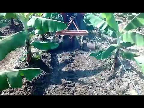 A211N Kubota Narrow Tractor Drive in Banana Land