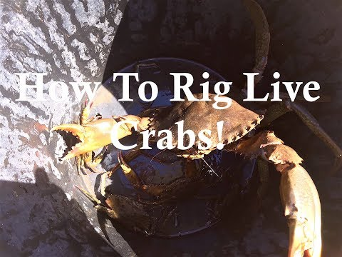 HOW TO RIG CRABS!