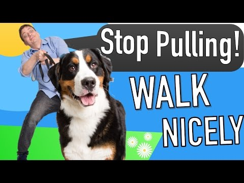 How to Teach your Dog to Walk on Leash