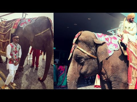 THERE IS A ELEPHANT AT THIS WEDDING [AMRUT+BHAVIKA] ~V65