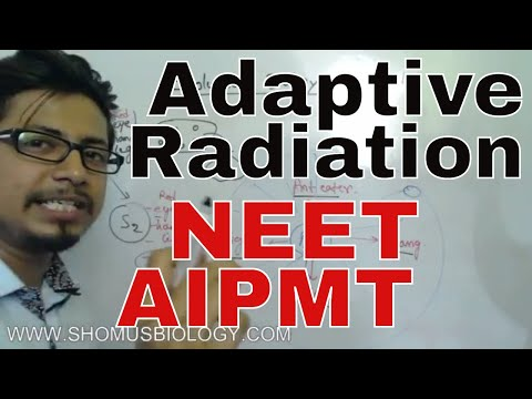 Adaptive radiation class 12 for NEET | evolution biology lecture