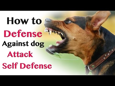 How to Defend against Dog Attack - Self Defence