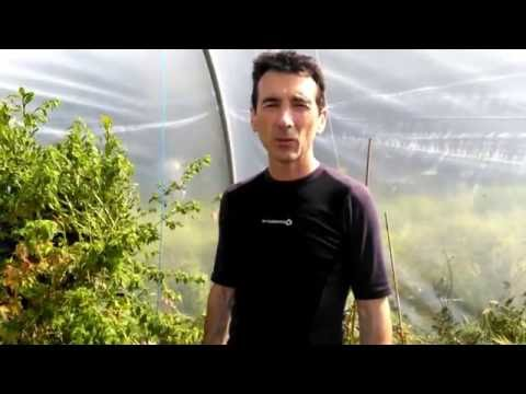 Spider Mite control with Neem Oil
