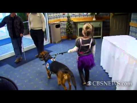 Dog Used to Detect Seizures in 6-Year-Old