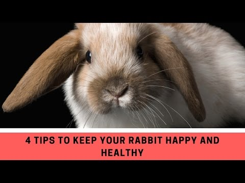4 Tips to Keep Your Rabbit Happy and Healthy