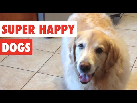 Super Happy Dogs   Funny Dog Video Compilation 2017