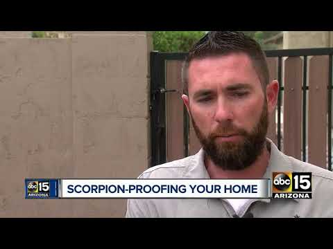 Pest proof your home ahead of scorpion season
