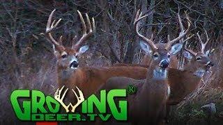 Deer Hunting | Big Buck, Big Story (#425) @GrowingDeer.tv