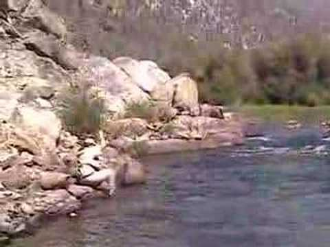 Golden Trout Fishing