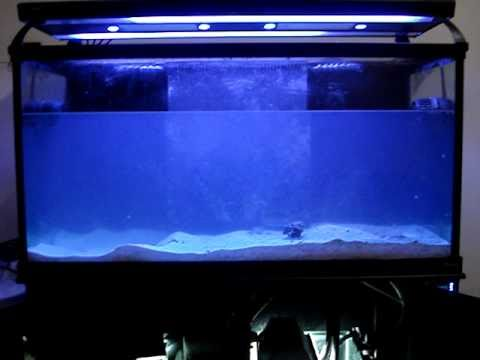 How To Clean & Sterilize A Used 90g Reef Day 1