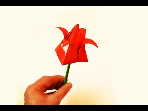 How to make a paper Tulip?