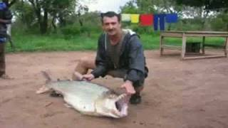 Largest Piranha Ever Caught