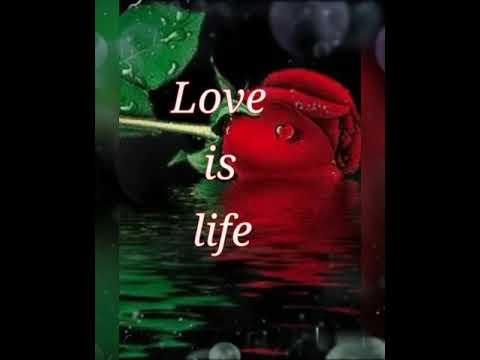 Love is life beautiful live quote #life, #quote, #love, #valentine