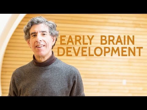 Research to shed light on how early experience impacts brain development