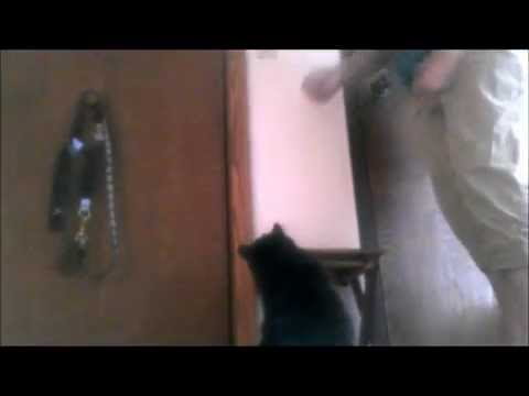 Dealing with a Door Darting Cat: How to teach your cat not to run out the door