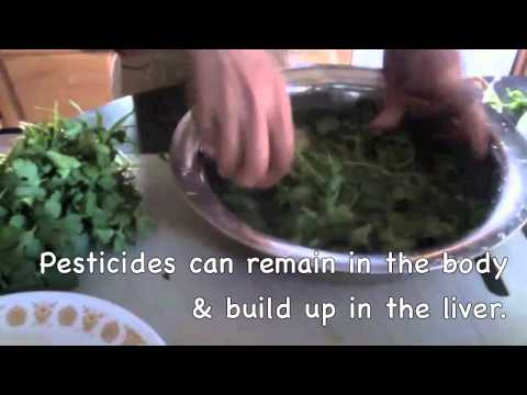 How to clean and disinfect Cilantro or coriander with hydrogen peroxide