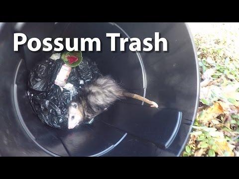 Possum Trash