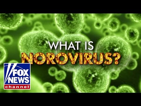 What is norovirus?