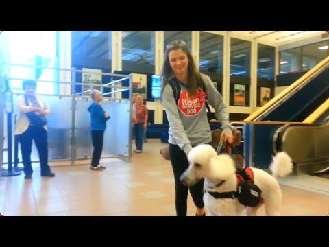 The Australian Poodle | ServiceDog Vlog