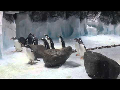 Pingwiny w
