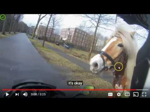 Man Chases Horse With Motorcycle To Save It - Is He Helping or Making It Worse?