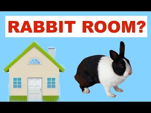 RABBIT ROOM!!!