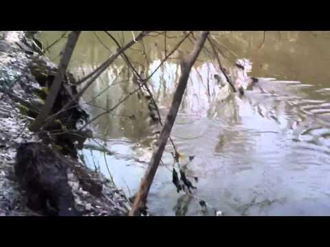 Бобер в Лихоборке-6