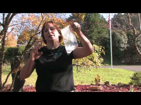 Gardening: Repelling Pests : How to Repel Flies With Water