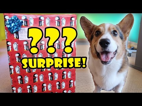 CORGI Xmas SURPRISE OPENING 50+ DOG Presents || Life After College: Ep. 578