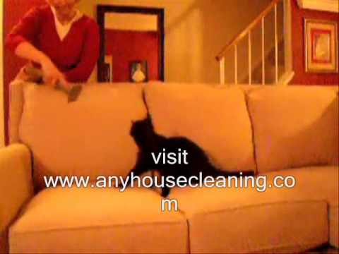 Pet Friendly House Cleaning  Removing Cat Hair  407 572-4118