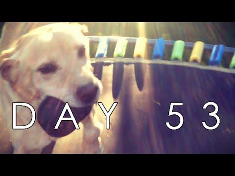 TRAMPOLINE DOG - D53 (9/19/15)