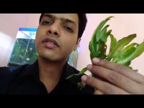 Trimming Plants & Cleaning Aquarium Part 2