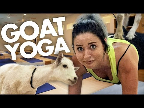 GOAT YOGA IS REAL?! (Get Jacked)