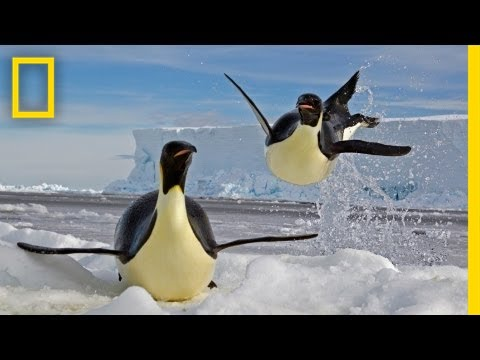 Paul Nicklen: Emperors of the Ice   Nat Geo Live