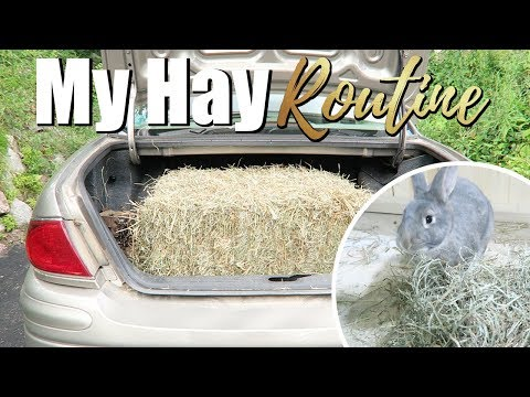 My Hay Routine For My Rabbits