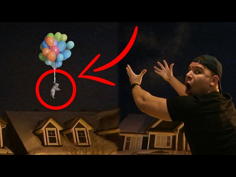 DO NOT TIE A PUPPY TO 100 BALLOONS!! IMPOSSIBLE?