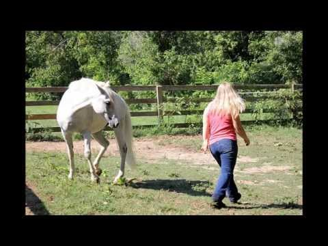 Secrets of Play With Your Horse To Develop Connection and Building A Lasting Relationship.