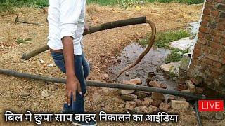 देखिए किस तरह बिल से बाहर निकाला ये कोबरा साप,कापुरवाडी गांव, अहमदनगर मे मिला यह कोबरा साप