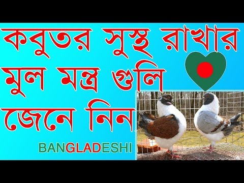how to keep the pigeons healthy    some tips for new pigeon lover    kobutor sustho rakhte koronio