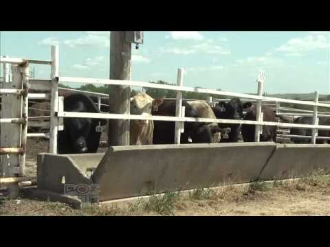 DocTalk Show 118 Fly Control in Cattle
